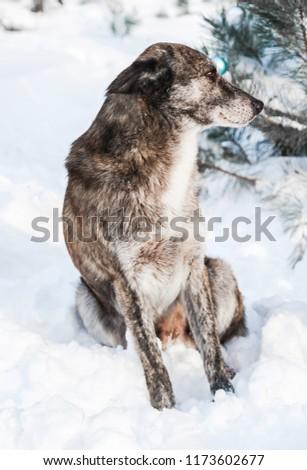 Cute dog in snow. #1173602677