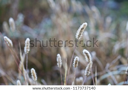 Delicate plants with hoarfrost on cold winter day #1173737140