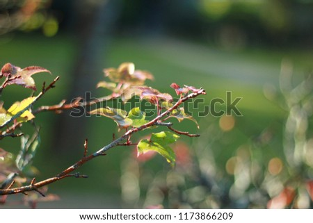 green, alternating red of leaf, colorful of  small branches of trees.background is green blurry and little of boken #1173866209