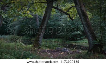 Green summer forest  #1173920185