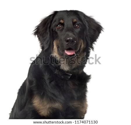 Close-up of a mixed breed dog, isolated #1174071130