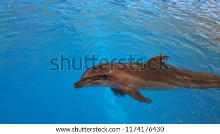 dolphin swimming in the pool #1174176430