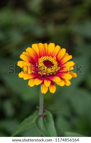 Flower in the garden #1174856164