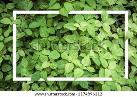 Green leaf for background . #1174896112