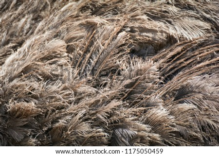 Ostrich feather background / feather of Ostrich or emu bird fur texture background #1175050459