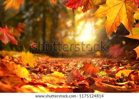 Lively closeup of falling autumn leaves with vibrant backlight from the setting sun #1175124814