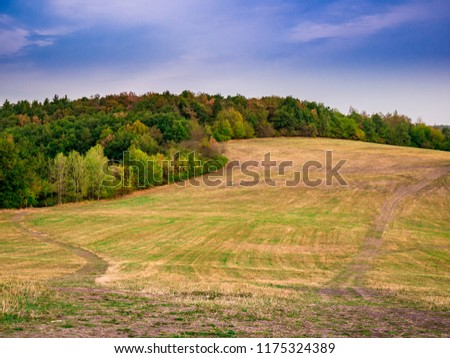 Paths on a dry meadow at a forest #1175324389
