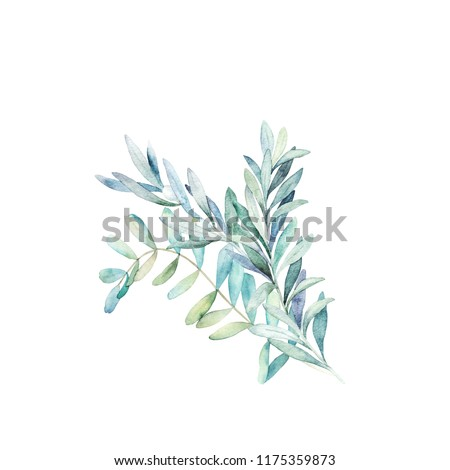 Watercolor eucalyptus branch. Botanical greenery card. Isolated images on white background. Art print