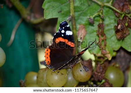 colorful butterfly on the summer flowers #1175657647
