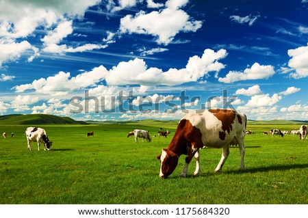 The cattle on the Hulunbuir summer grassland. Royalty-Free Stock Photo #1175684320