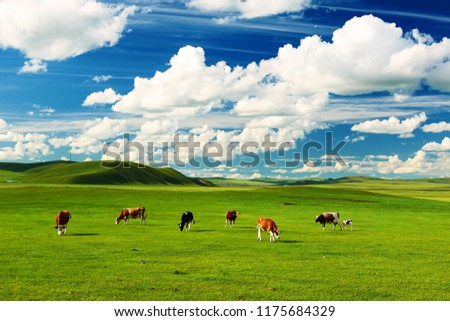 The cattle on the Hulunbuir summer grassland. Royalty-Free Stock Photo #1175684329