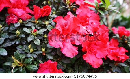 nature flower forest          #1176094495