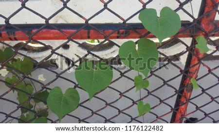 Heart-shaped creeping up the iron net. #1176122482