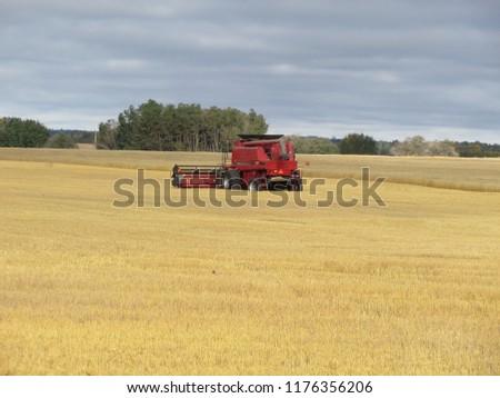 harvest fiel, Autumn, Canada - Alberta #1176356206