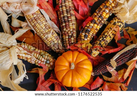 Corn or Indian corn,Those ears with the multicolored kernrels, crops up in all sorts of fall decoration. Corn and pumpkin background picture.