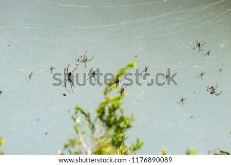 A city of spiders in Brisbane,Southern Queensland,Australia #1176890089