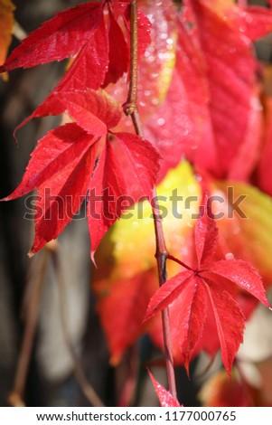 Autumn yellow days #1177000765