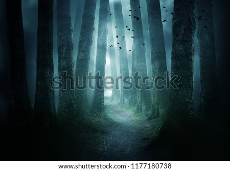A pathway between trees leading into a dark and misty forest. Photo Composite. #1177180738