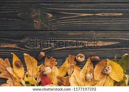 Bright colorful autumn leaves with acorns and nuts on rustic wooden background, flat lay. Fall image. Space for text. Hello Autumn. Happy Thanksgiving. Greeting card mock-up