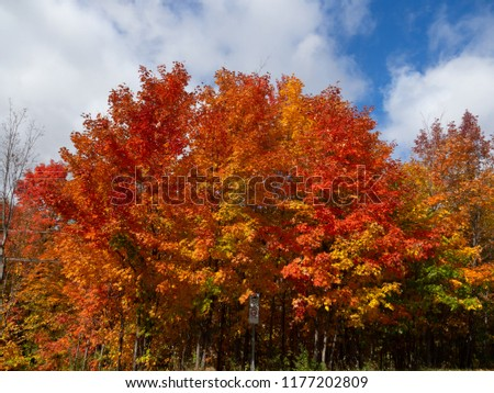 Colorful Trees in Fall, Québec, Canada #1177202809