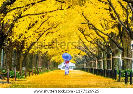 Beautiful girl wearing japanese traditional kimono at row of yellow ginkgo tree in autumn. Autumn park in Tokyo, Japan. #1177326925
