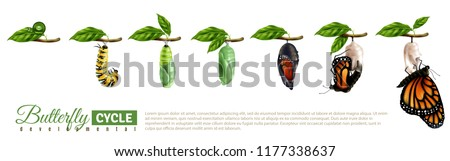 Butterfly metamorphosis horizontal set showing developmental cycle from egg to adult insect realistic vector illustration