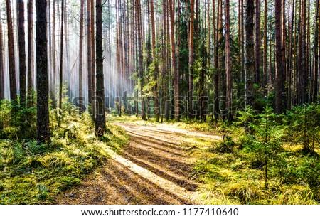 Forest road sunlight landscape. Sunlight forest road scene. Forest road sunlight view #1177410640