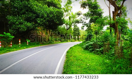 A road beside permanent nature #1177433233