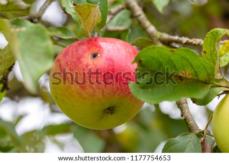 In this Apple lives a worm, so it is grown without the use of pe #1177754653