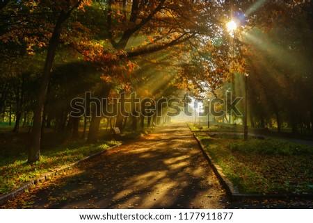 Autumn in the city park. The city of Khmelnitsky. #1177911877