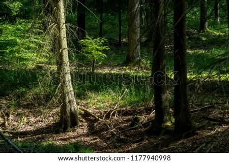 Forest landscape. Pine trees close-up, Germany #1177940998