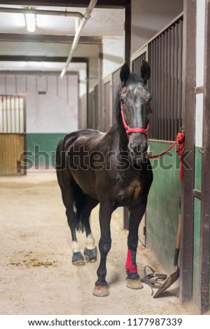 Horse in the stable #1177987339