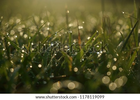 Morning dew in the meadow, taken by zooming lens with small depth of fields.   #1178119099