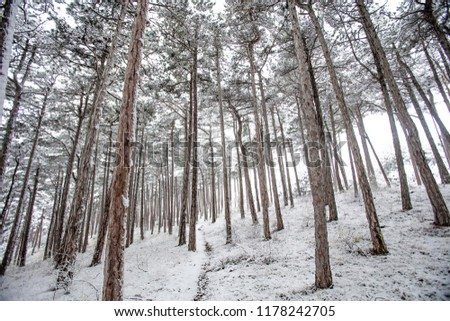 snow covered forest, winter landscape  #1178242705