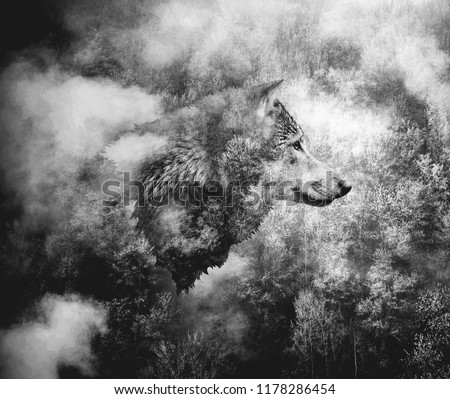 Black and White Collage: Wolf Head and the Misty Forest. Double Exposition.