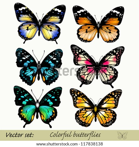 Set of realistic vector butterflies