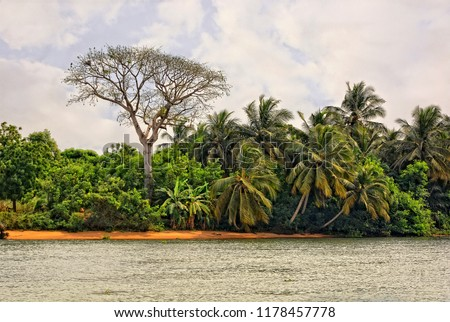 African landscape. Stylish bare tree and palm trees with water and sky in background. Beautiful African nature.