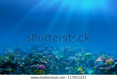 Underwater coral reef background #117851221