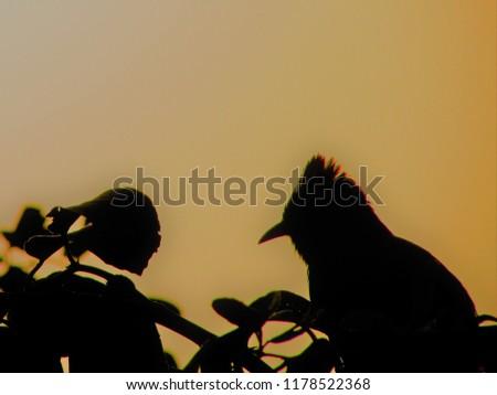 Birds in wild life. This photos are capture in garden. #1178522368