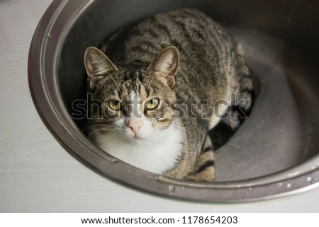 The cat lies in the sink and looks into the camera #1178654203