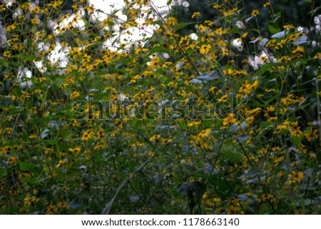 Image of yellow flowers #1178663140