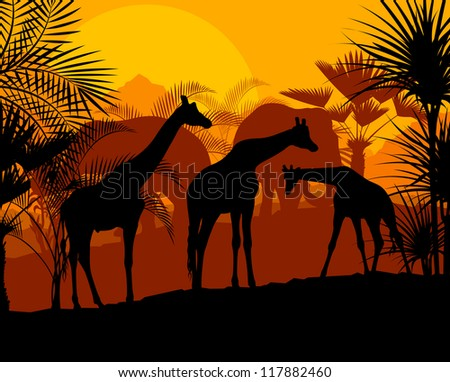 Giraffe at sunset vector background #117882460