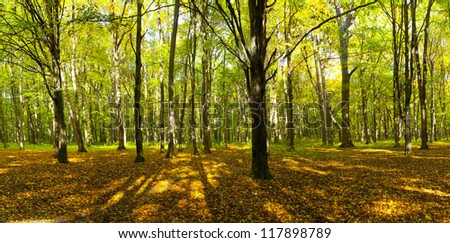autumn forest trees. nature green wood sunlight backgrounds. #117898789