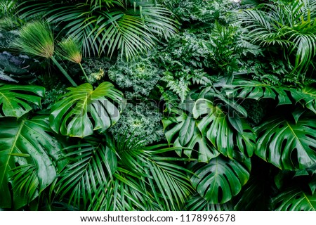 Tropical green leaves background, fern, palm and Monstera Deliciosa leaf on wall with dark toning, floral jungle pattern concept background, close up