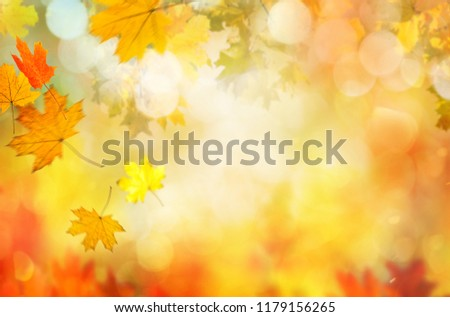 autumn leaves background #1179156265