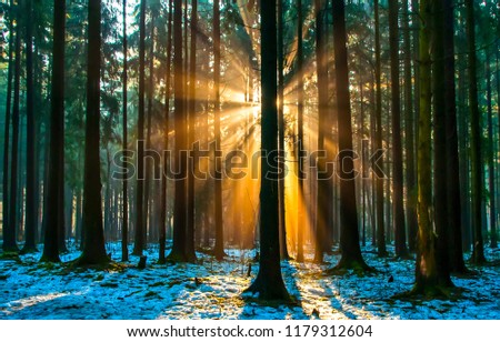 Forest trees sunset silhouettes background. Sunset forest trees sunlight. Forest trees sunlight sunset view #1179312604