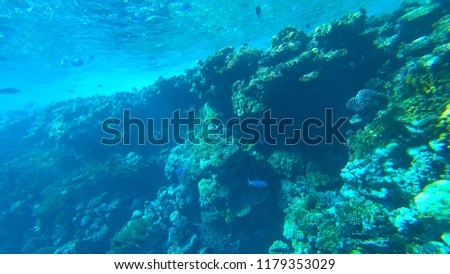 the coral reef #1179353029