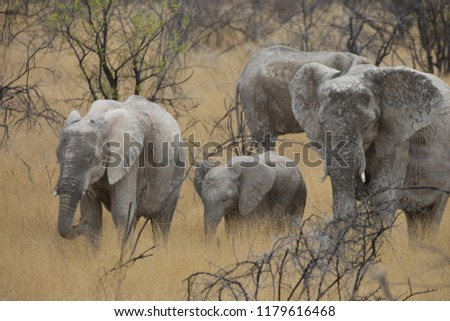 a big elephant family in africa is walking around for eating and drinking water #1179616468
