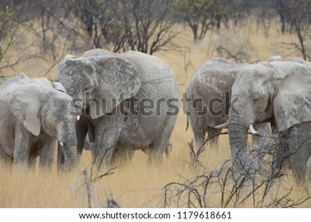 a big elephant family in africa is walking around for eating and drinking water #1179618661
