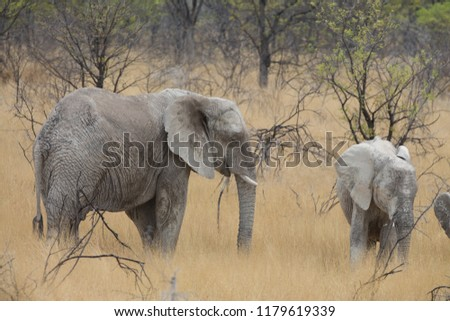 a big elephant family in africa is walking around for eating and drinking water #1179619339